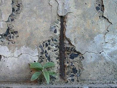 возникновение бетон